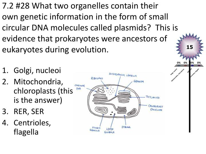 7.2 #28 What two organelles contain their