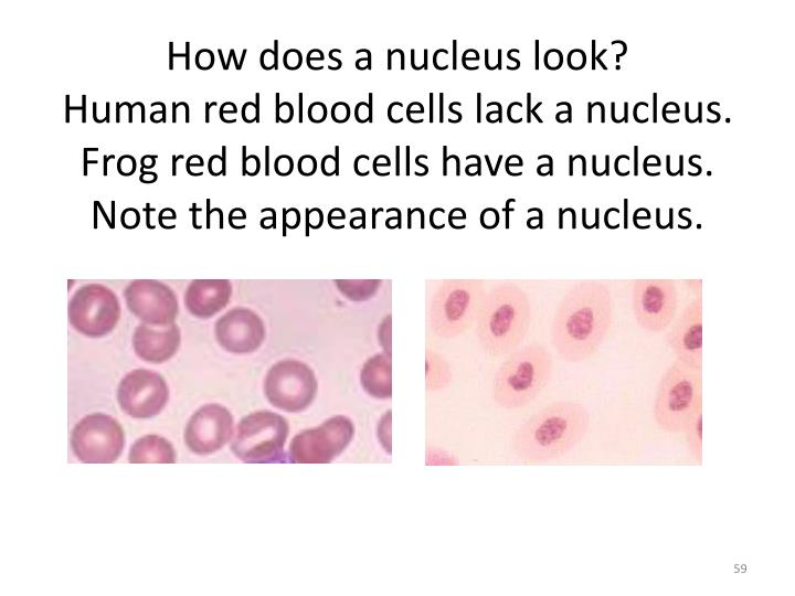 How does a nucleus look?