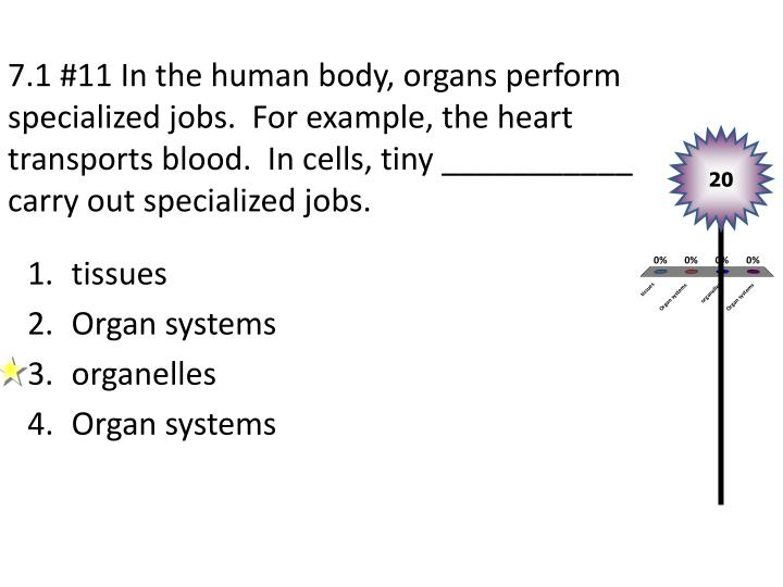 7.1 #11 In the human body, organs perform specialized jobs.  For example, the heart transports blood.  In cells, tiny ___________ carry out specialized jobs.