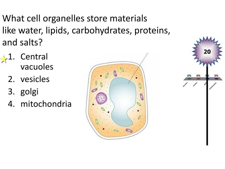 What cell organelles store materials