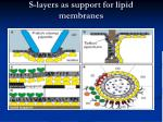 s layers as support for lipid membranes