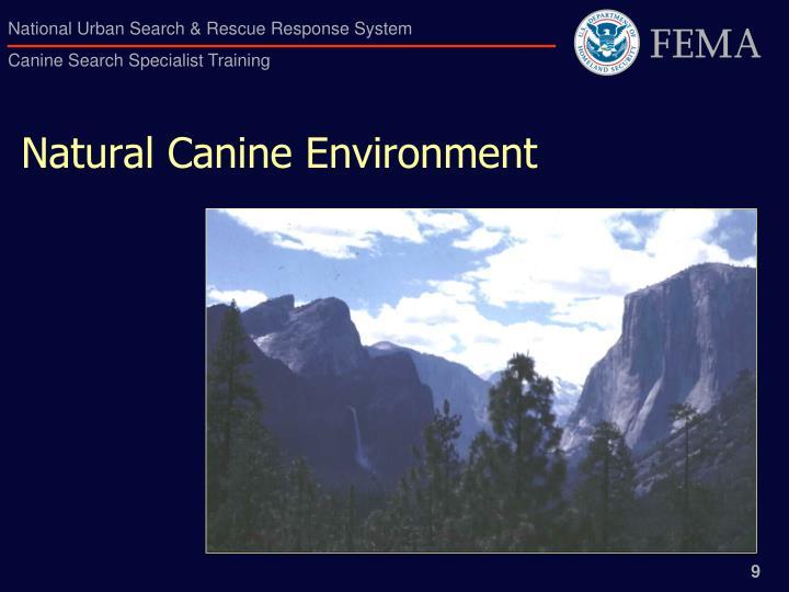 Natural Canine Environment