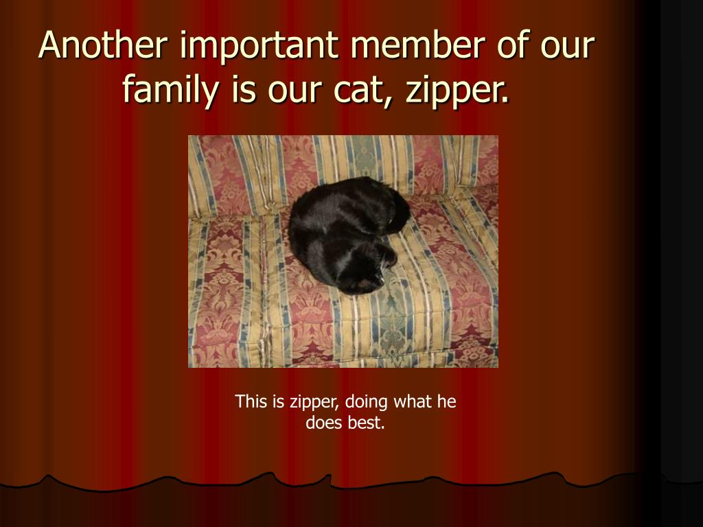 Another important member of our family is our cat, zipper.