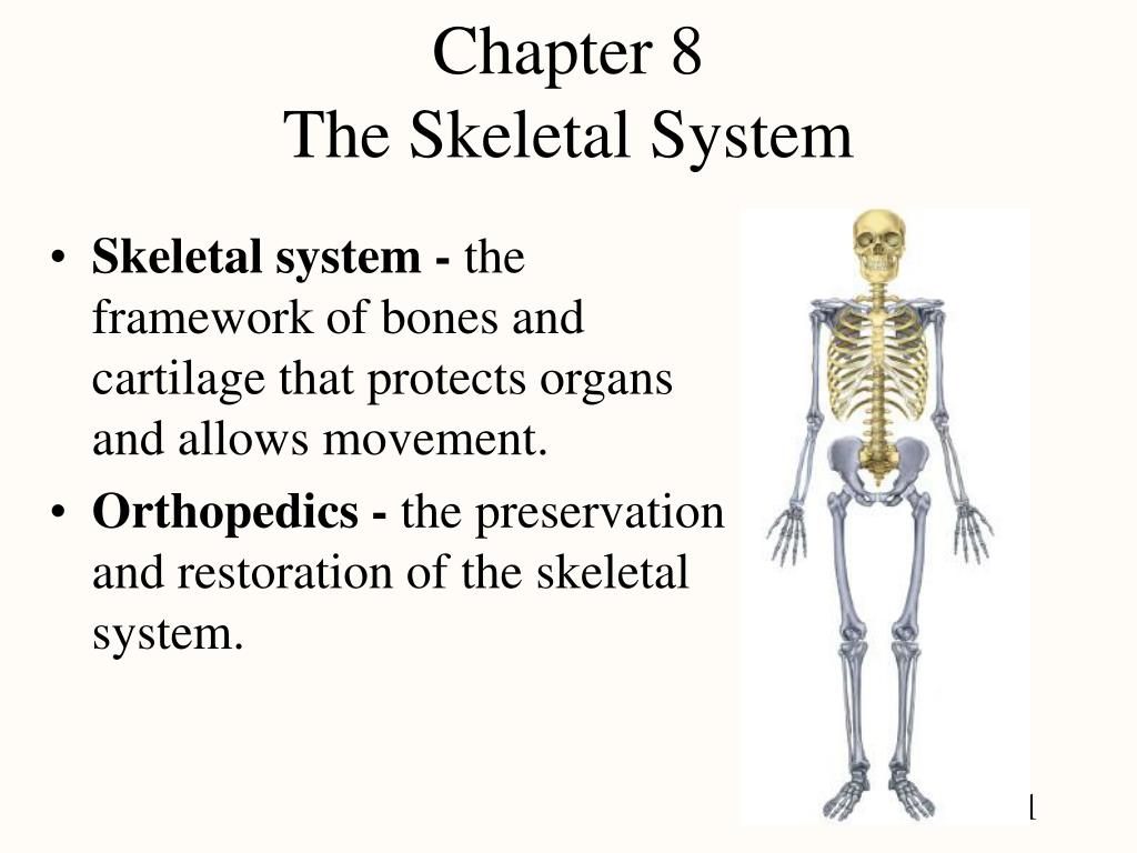 Ppt Chapter 8 The Skeletal System Powerpoint Presentation Id1074225