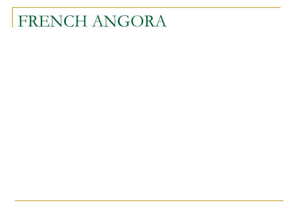 FRENCH ANGORA
