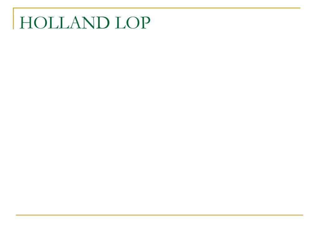 HOLLAND LOP