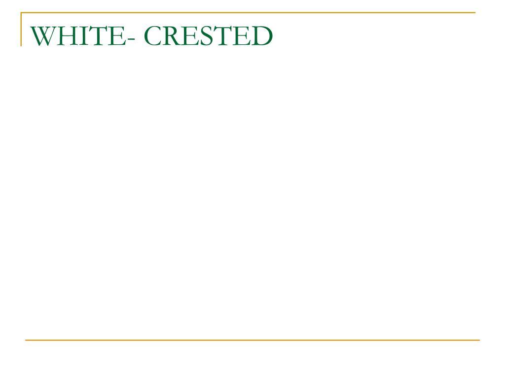 WHITE- CRESTED