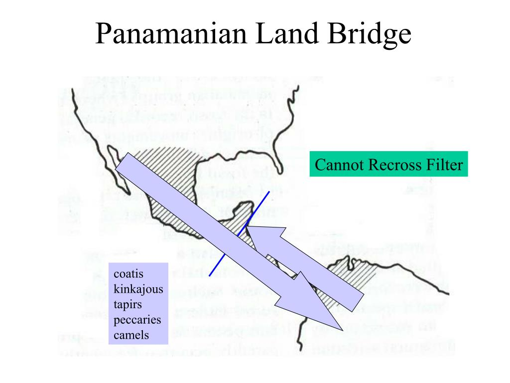 Panamanian Land Bridge