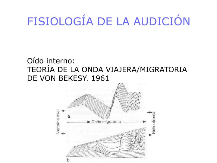 FISIOLOGÍA DE LA AUDICIÓN