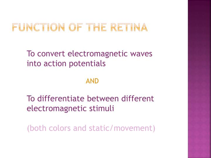 FUNCTION OF THE RETINA