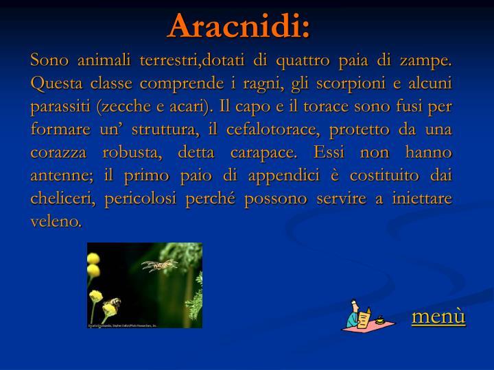 Aracnidi: