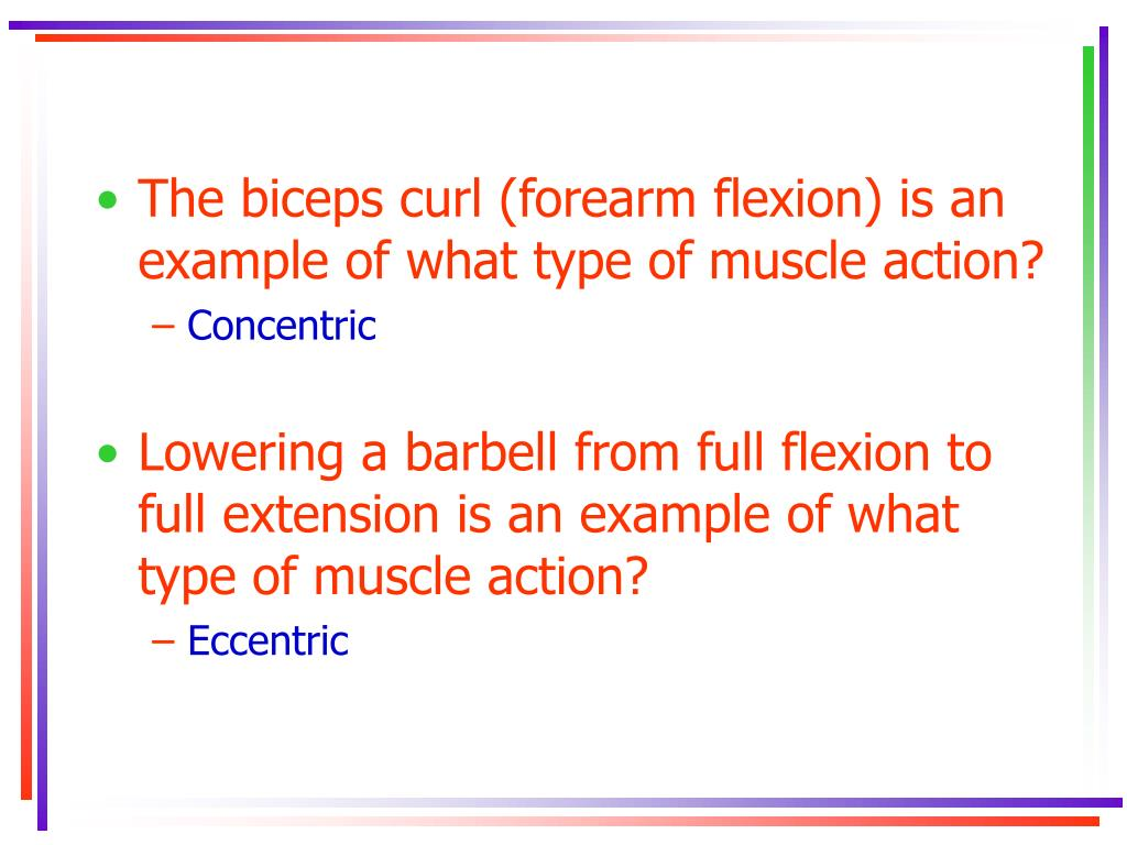 The biceps curl (forearm flexion) is an example of what type of muscle action?
