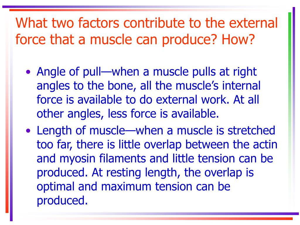 What two factors contribute to the external force that a muscle can produce? How?