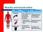 muscles and muscle action87