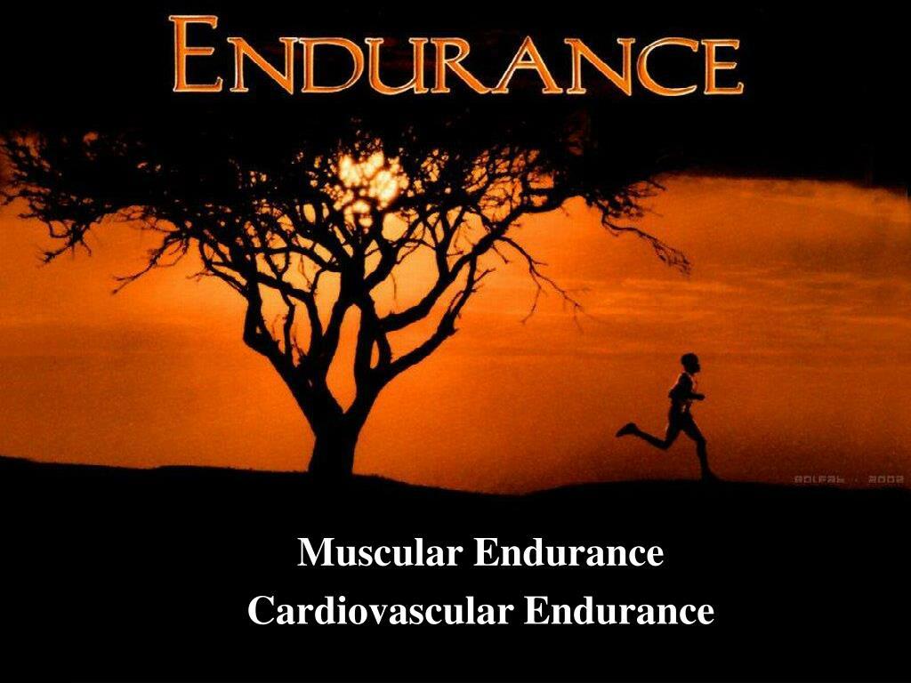 muscular endurance cardiovascular endurance l.