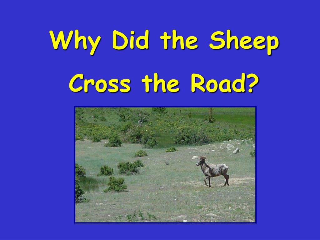 Why Did the Sheep