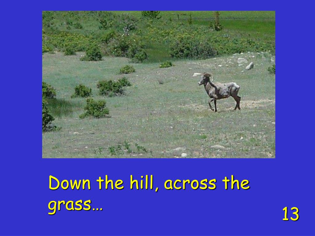 Down the hill, across the grass…