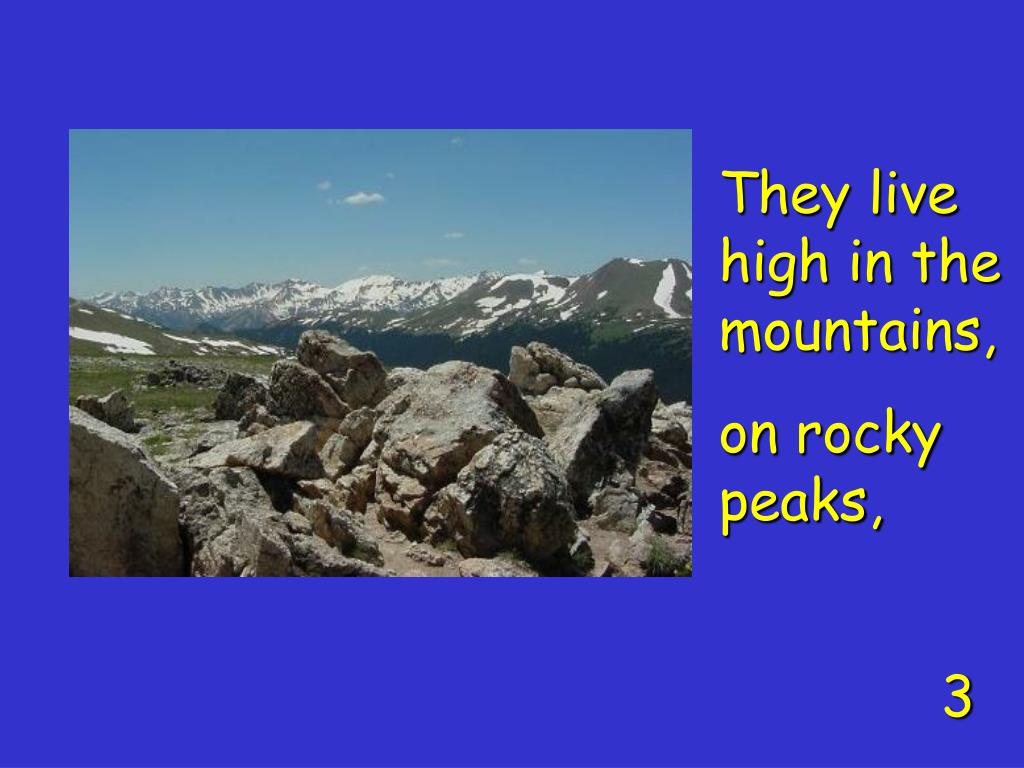 They live high in the mountains,