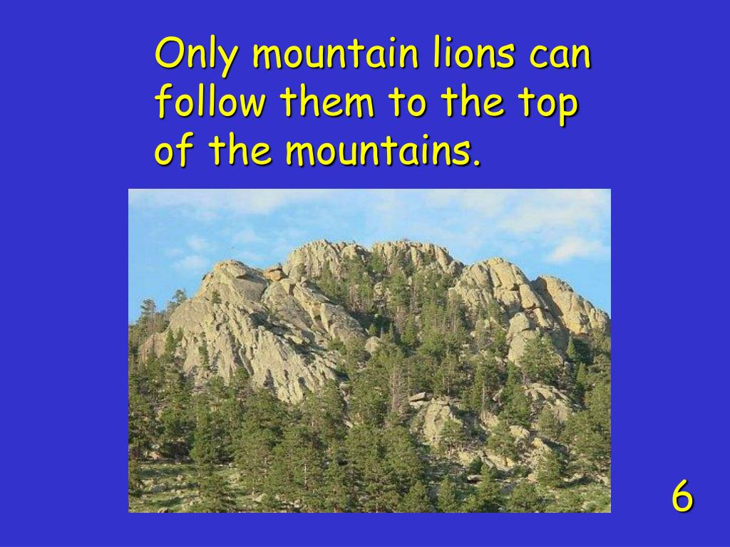 Only mountain lions can follow them to the top of the mountains.