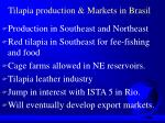 tilapia production markets in brasil