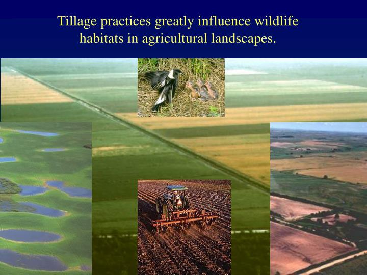 Tillage practices greatly influence wildlife