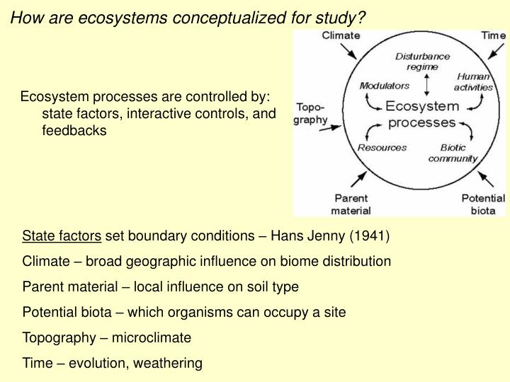 How are ecosystems conceptualized for study?