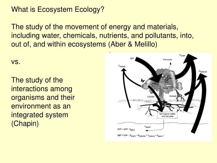 What is Ecosystem Ecology?