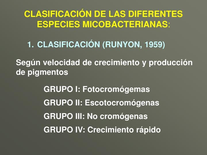 CLASIFICACIÓN DE LAS DIFERENTES ESPECIES MICOBACTERIANAS