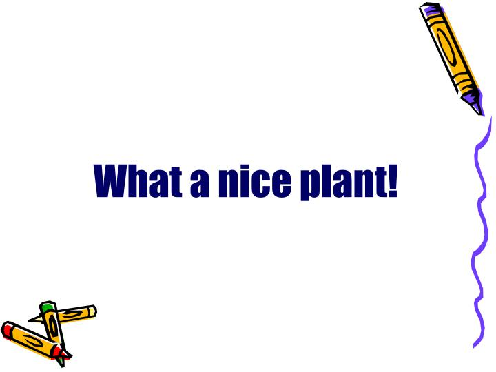 What a nice plant!