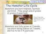 the hamster life cycle