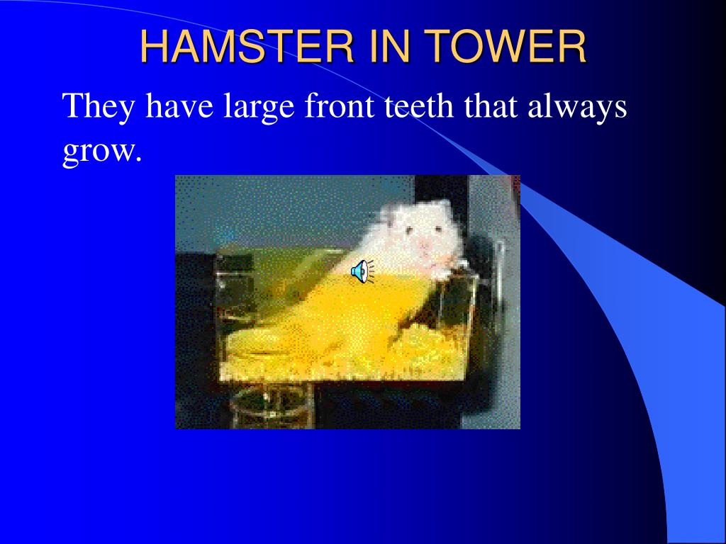 HAMSTER IN TOWER