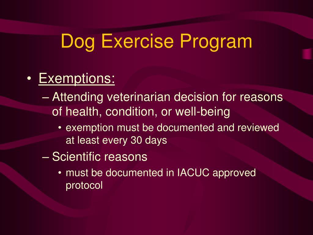 Dog Exercise Program