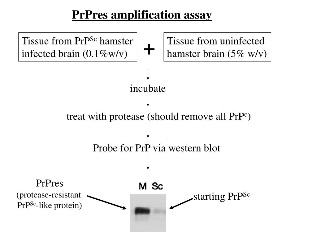Tissue from PrP