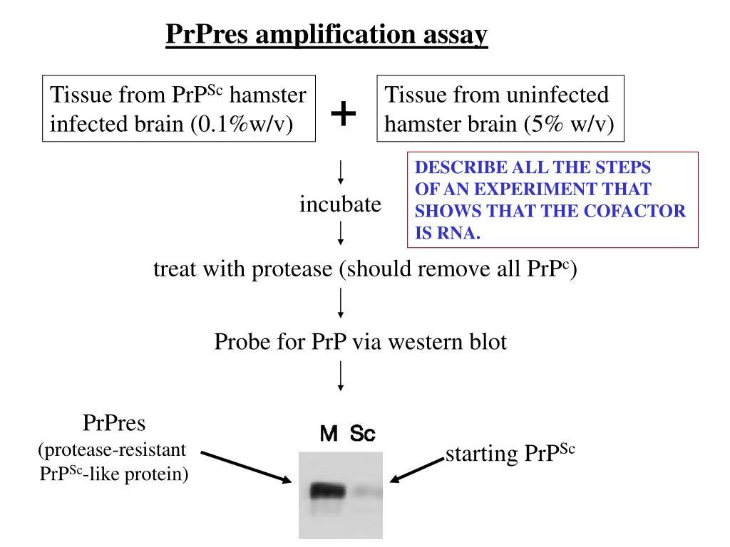 PrPres amplification assay
