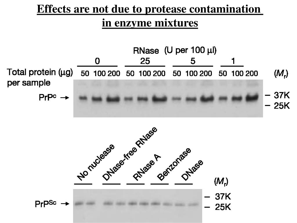 Effects are not due to protease contamination