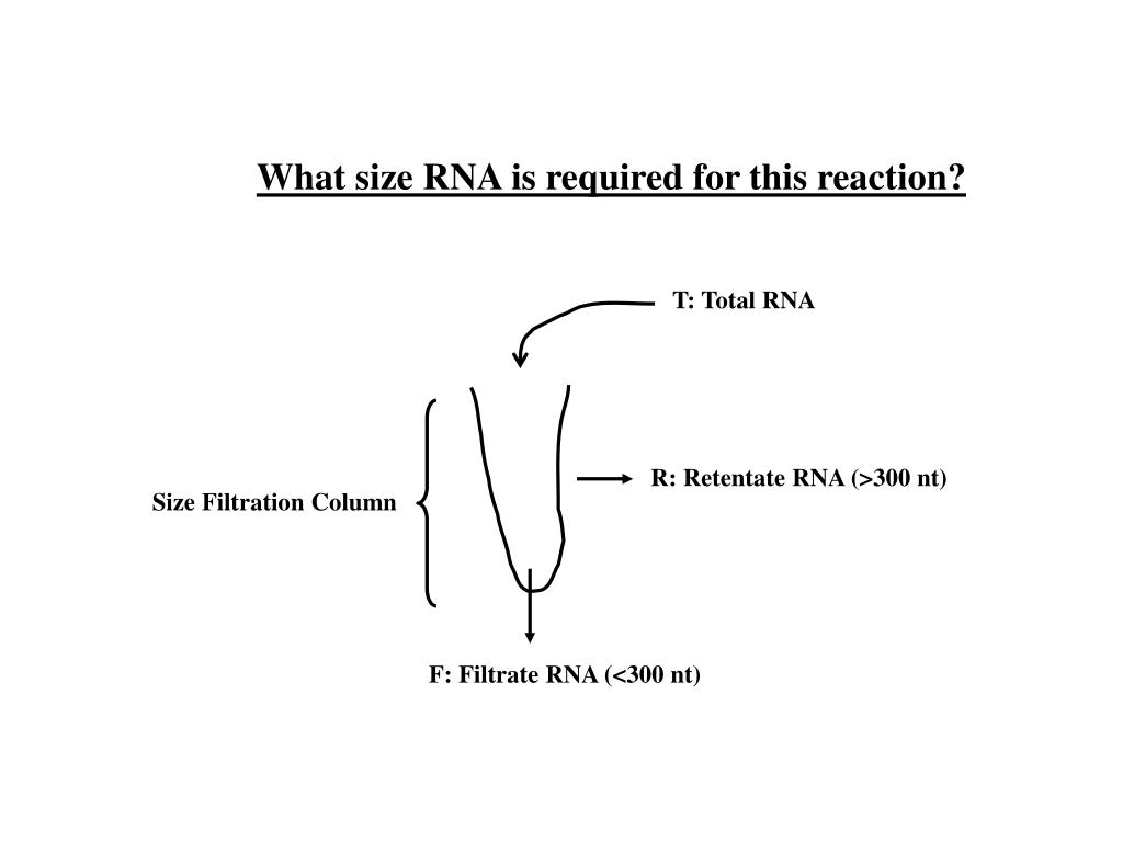 What size RNA is required for this reaction?