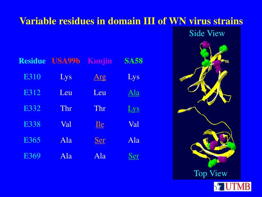 Variable residues in domain III of WN virus strains