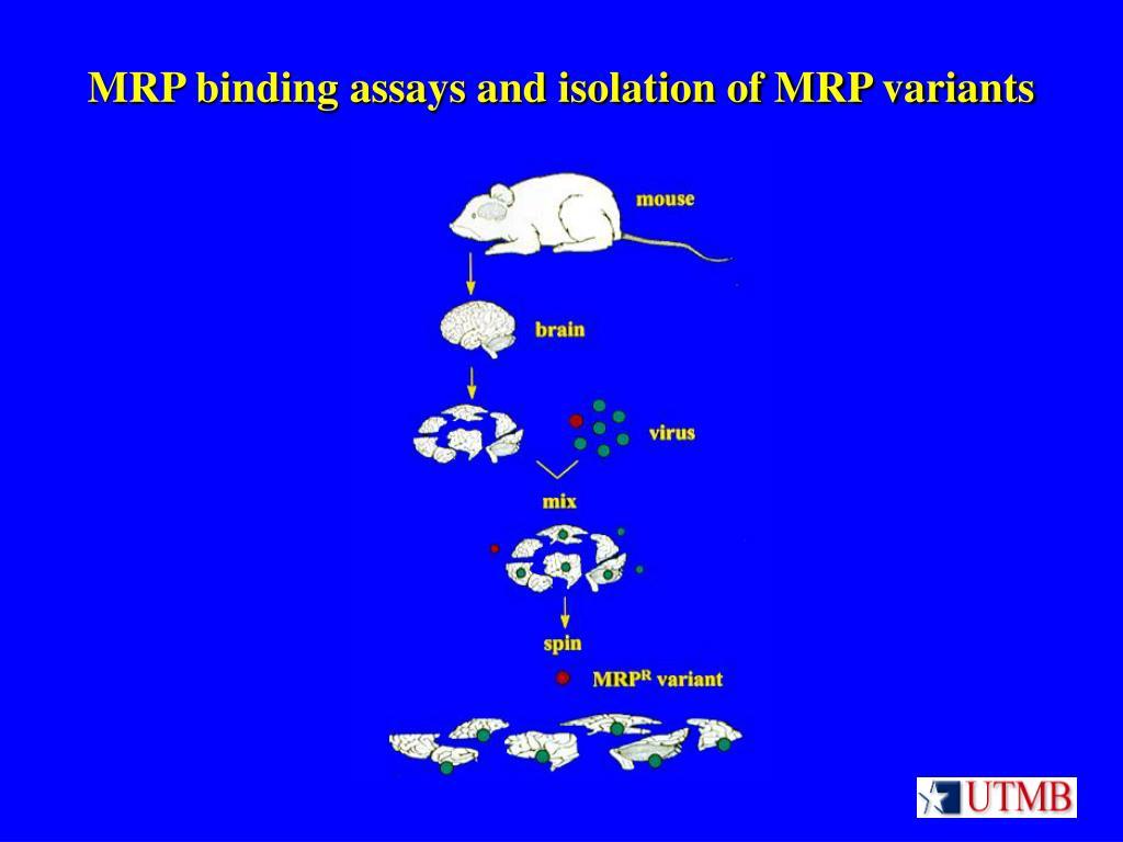 MRP binding assays and isolation of MRP variants