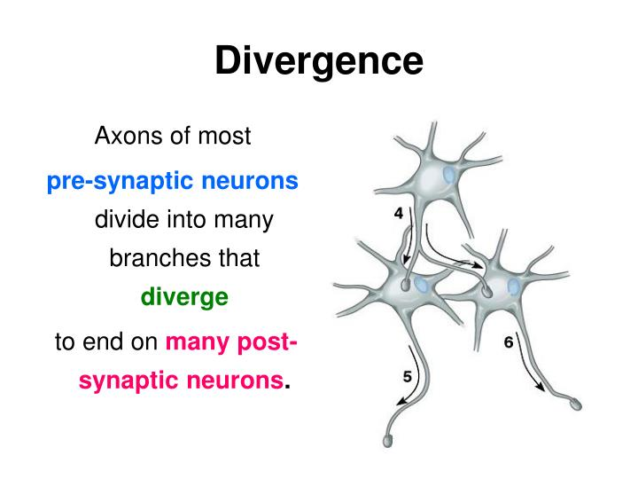 Axons of most