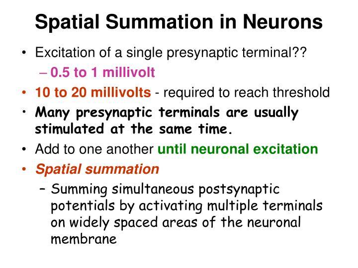 Spatial Summation in Neurons