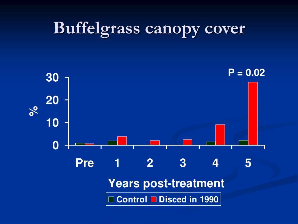 Buffelgrass canopy cover