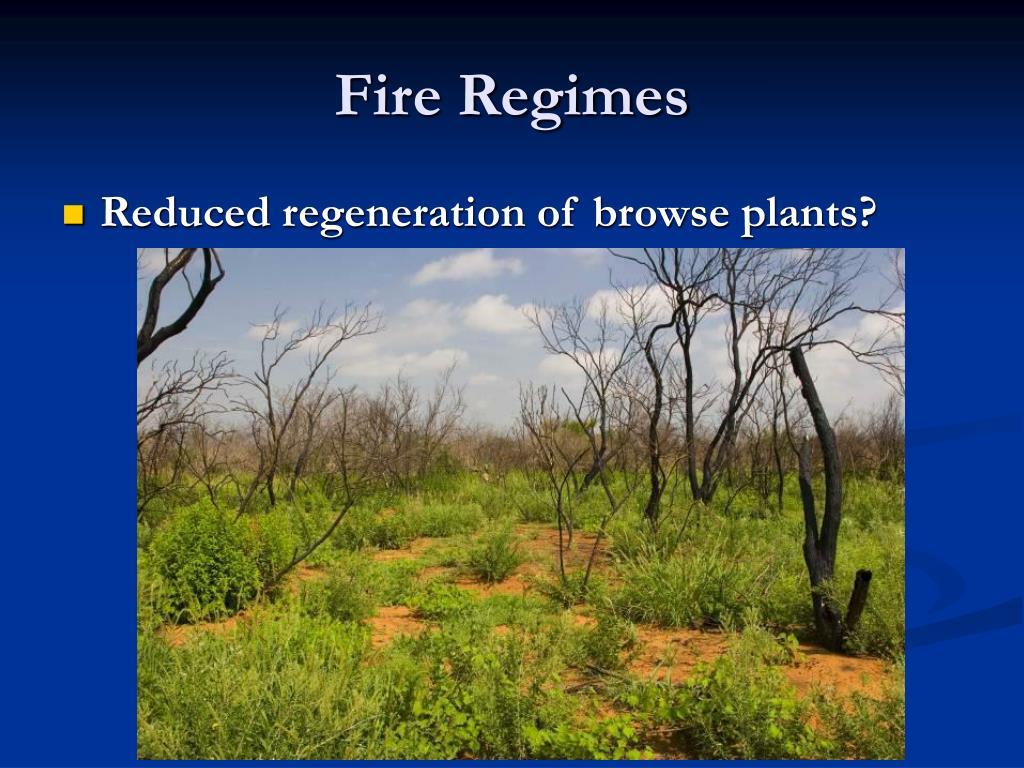 Fire Regimes