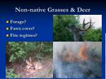 non native grasses deer
