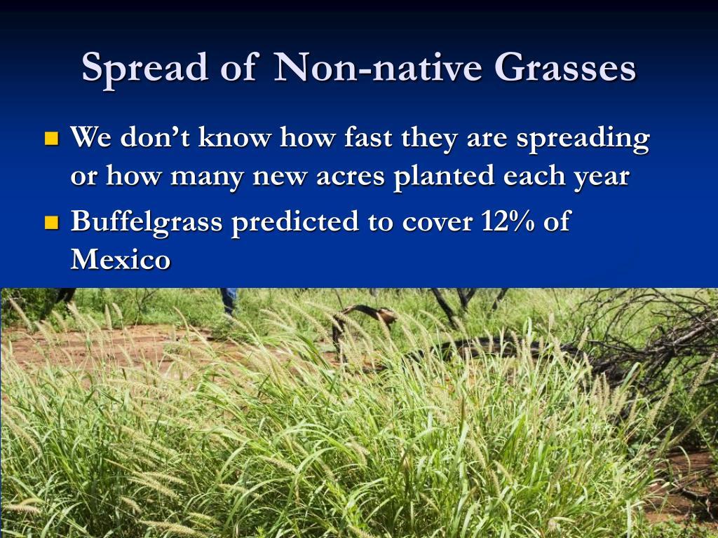 Spread of Non-native Grasses