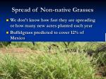 spread of non native grasses