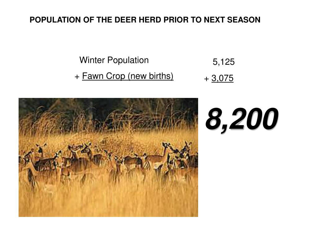 POPULATION OF THE DEER HERD PRIOR TO NEXT SEASON