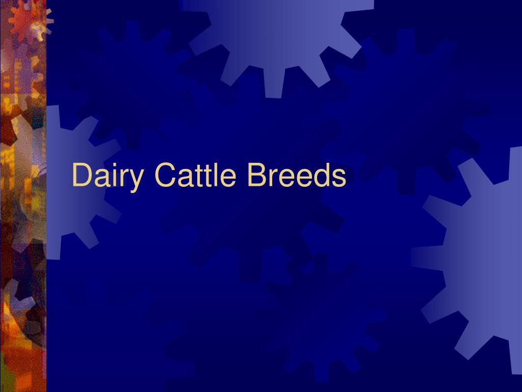 dairy cattle breeds l.