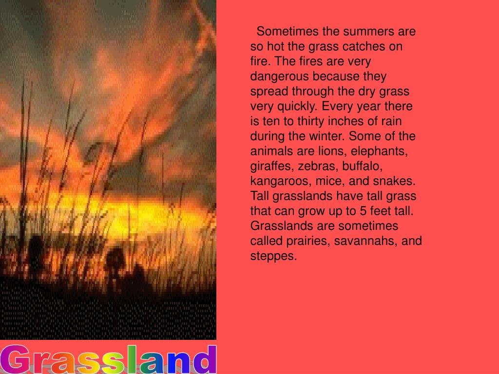 Sometimes the summers are so hot the grass catches on fire. The fires are very dangerous because they spread through the dry grass very quickly. Every year there is ten to thirty inches of rain during the winter. Some of the animals are lions, elephants, giraffes, zebras, buffalo, kangaroos, mice, and snakes. Tall grasslands have tall grass that can grow up to 5 feet tall. Grasslands are sometimes called prairies, savannahs, and steppes.