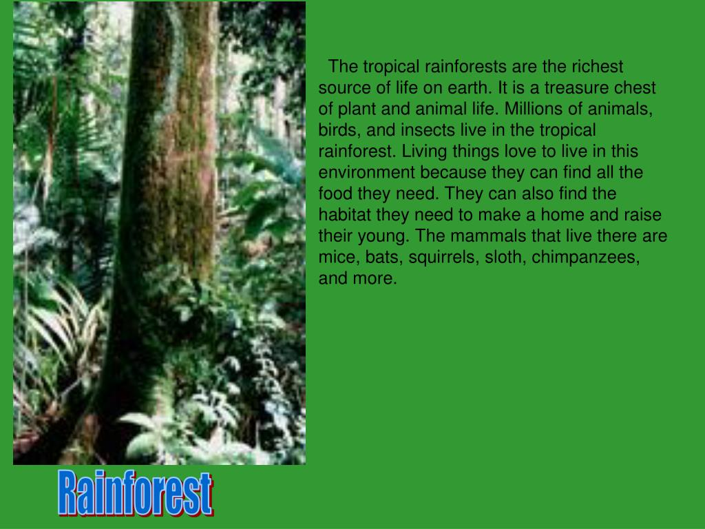 The tropical rainforests are the richest source of life on earth. It is a treasure chest of plant and animal life. Millions of animals, birds, and insects live in the tropical rainforest. Living things love to live in this environment because they can find all the food they need. They can also find the habitat they need to make a home and raise their young. The mammals that live there are mice, bats, squirrels, sloth, chimpanzees, and more.