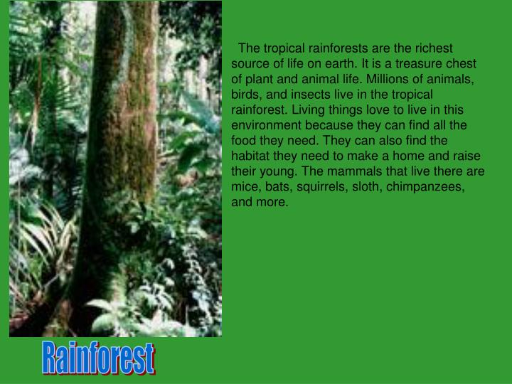 The tropical rainforests are the richest source of life on earth. It is a treasure chest of plant ...